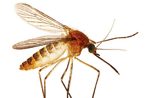You Kill a Mosquito, You're in Trouble