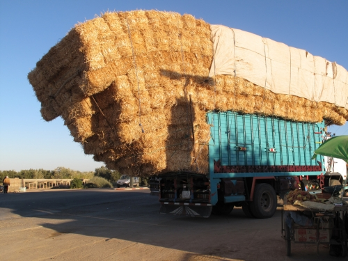 The Haylord